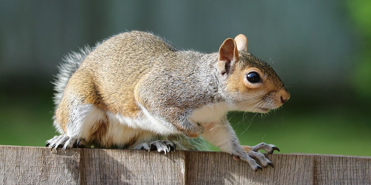 Delayed Kentucky internet project faces new squirrel setback