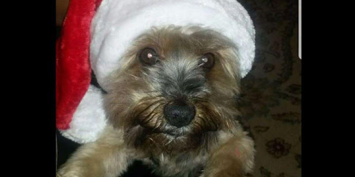Dog dies hours after grooming at TX PetSmart