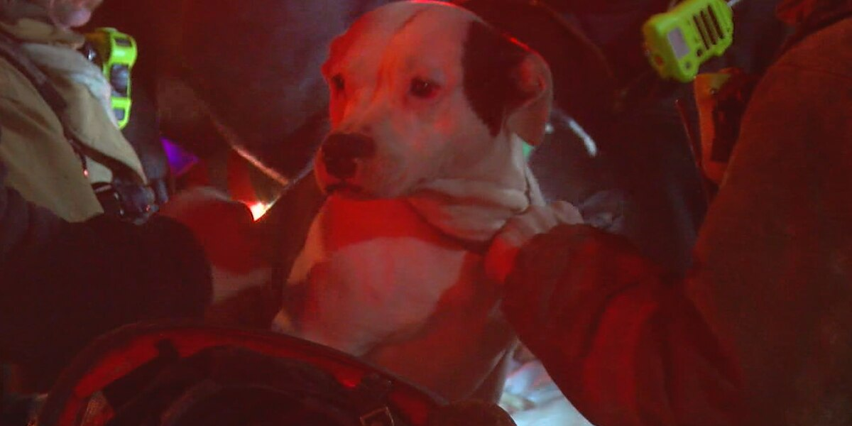 12 people, 2 dogs rescued from Lower Price Hill apartment fire
