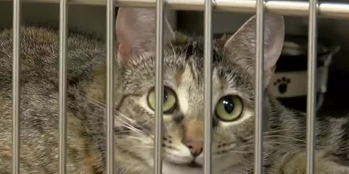 Animal shelter closes after staff member tests positive for COVID-19