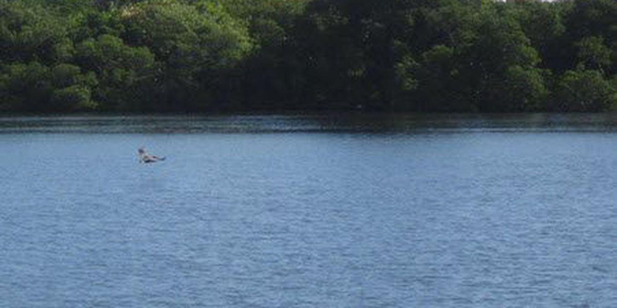 3 greater Cincinnati beaches under E. coli advisory