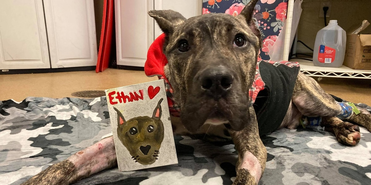 Ethan the dog continues path to recovery, community support grows