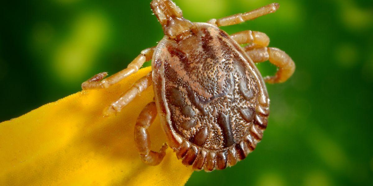 Mild winter bringing ticks out earlier