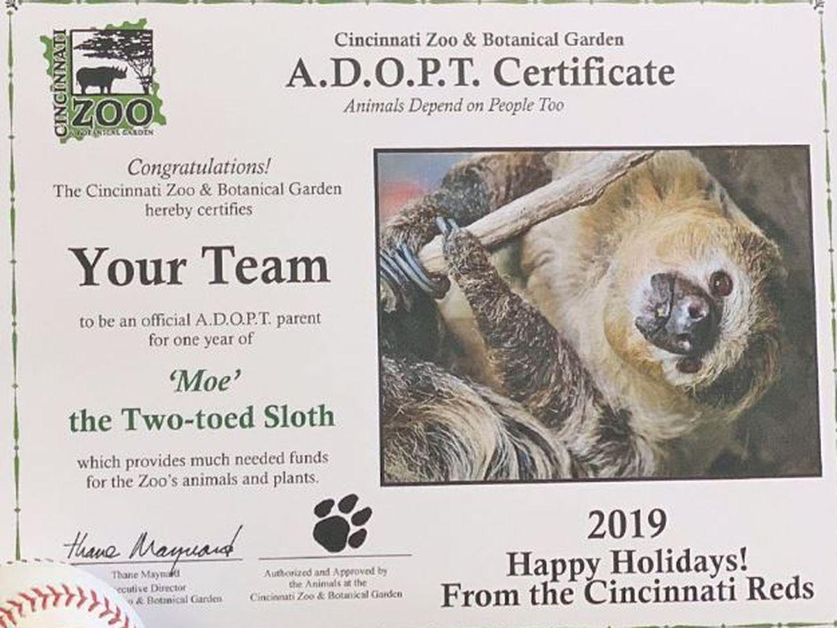 Cincinnati Zoo's sloth Moe gets adopted (twice!) in MLB gift exchange
