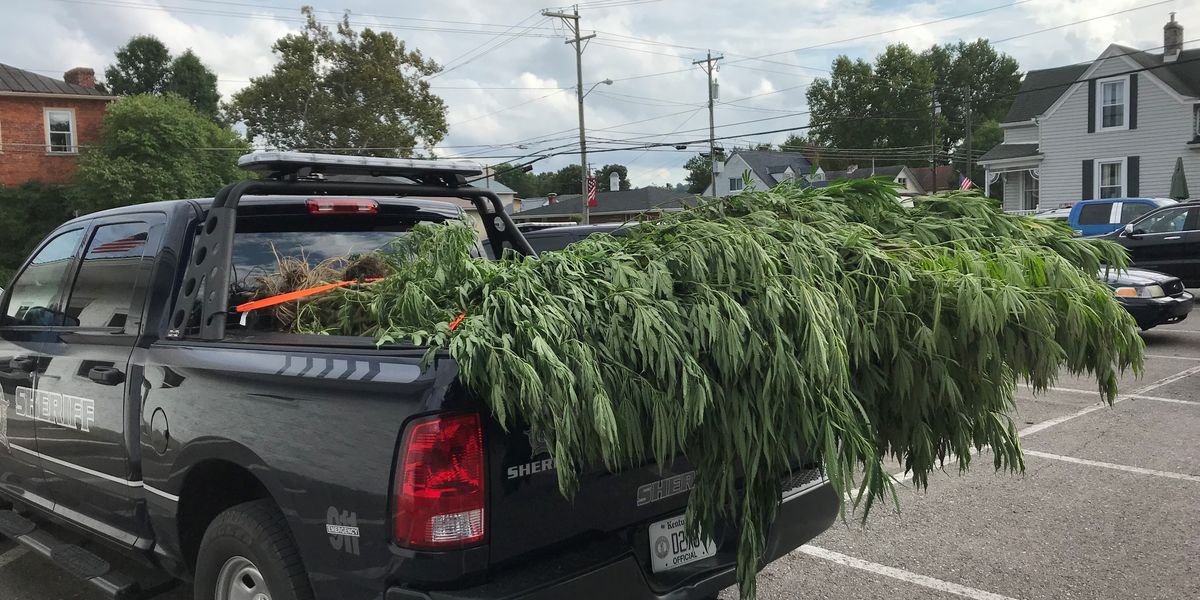 Marijuana plants discovered during aerial searches in NKY