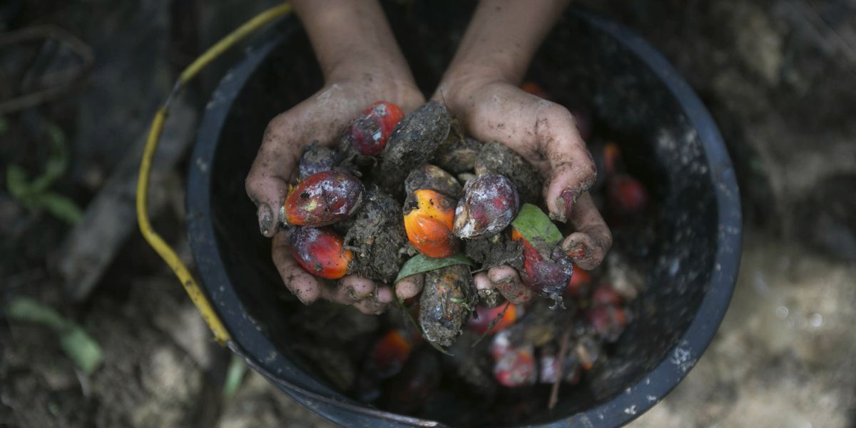 US says it will block palm oil from large Malaysian producer