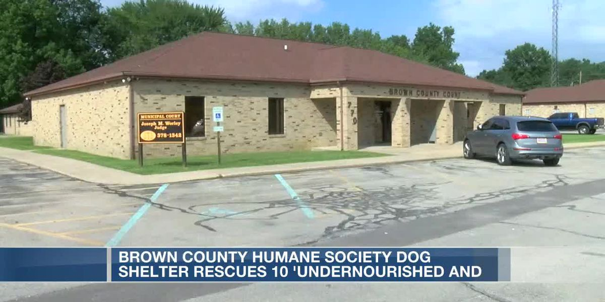 Brown County Humane Society rescues several dogs in Georgetown