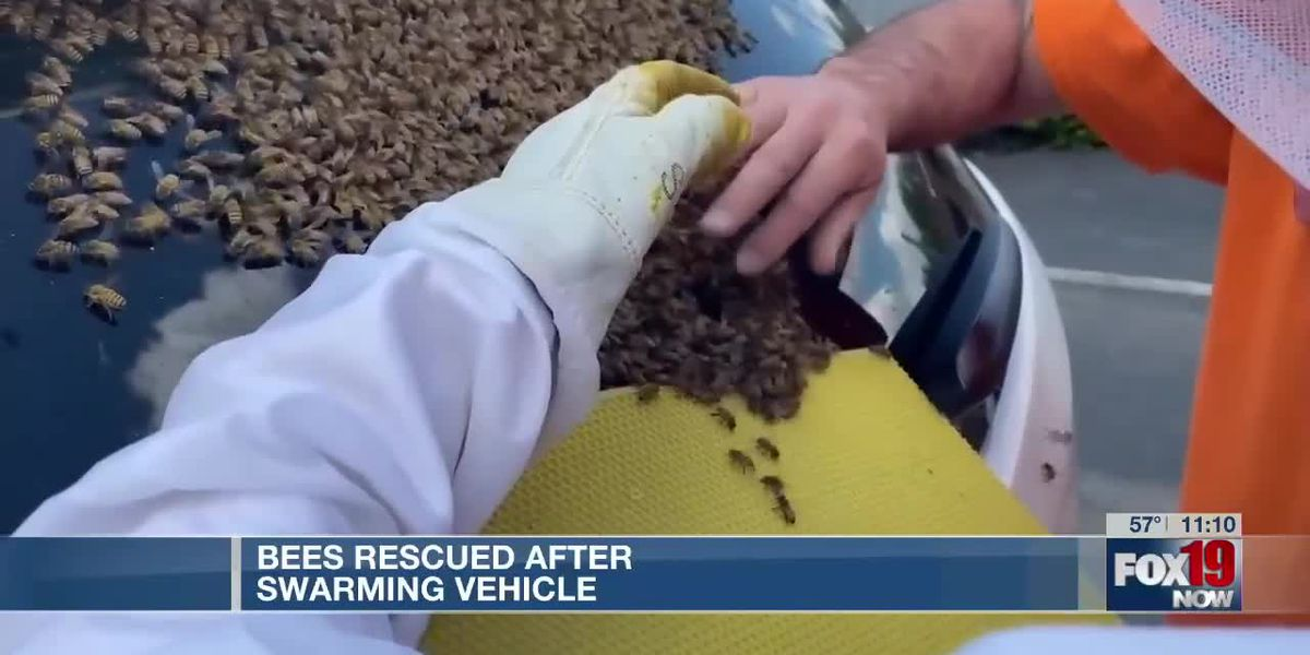 Bees rescued after swarming vehicle in Anderson Twp.