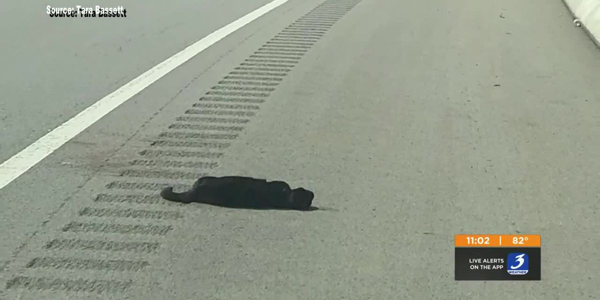 Cat dies after being thrown out of moving car on the interstate