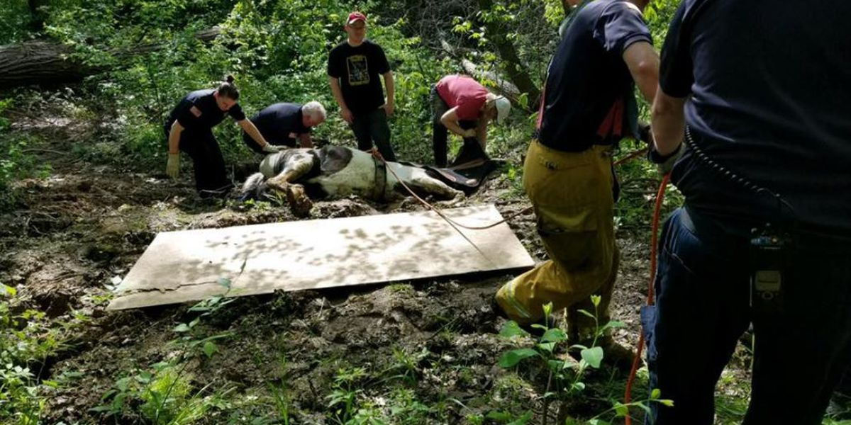 Springfield Twp firefighters rescue horse from ravine