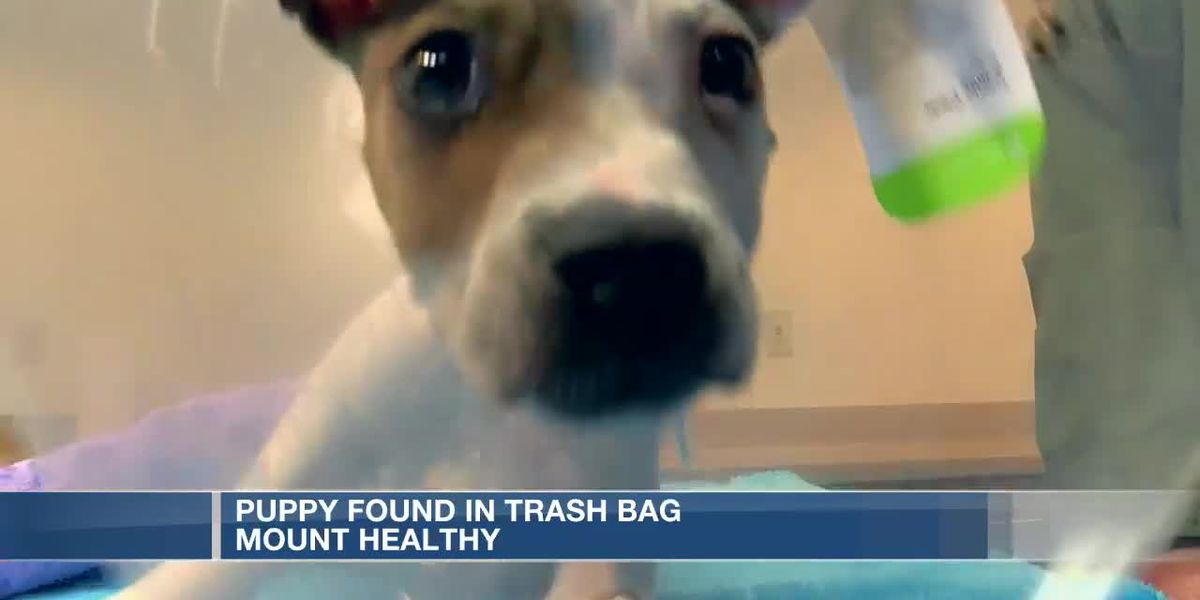 Abandoned puppy found in garbage bag in Mt. Healthy