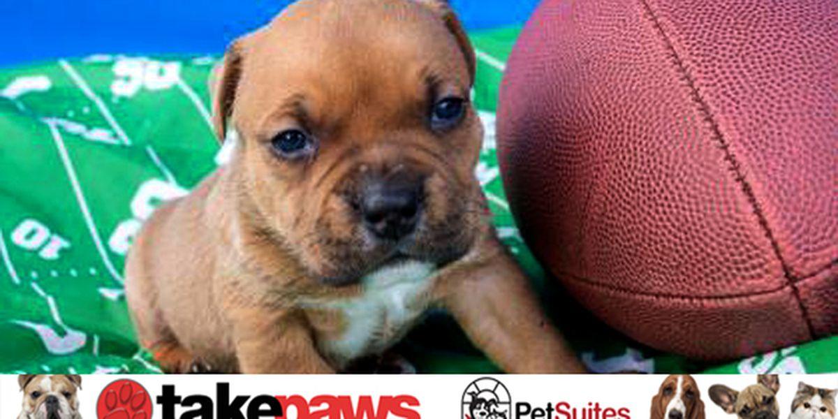 TAKE PAWS: Adoptable pets across the Tri-State