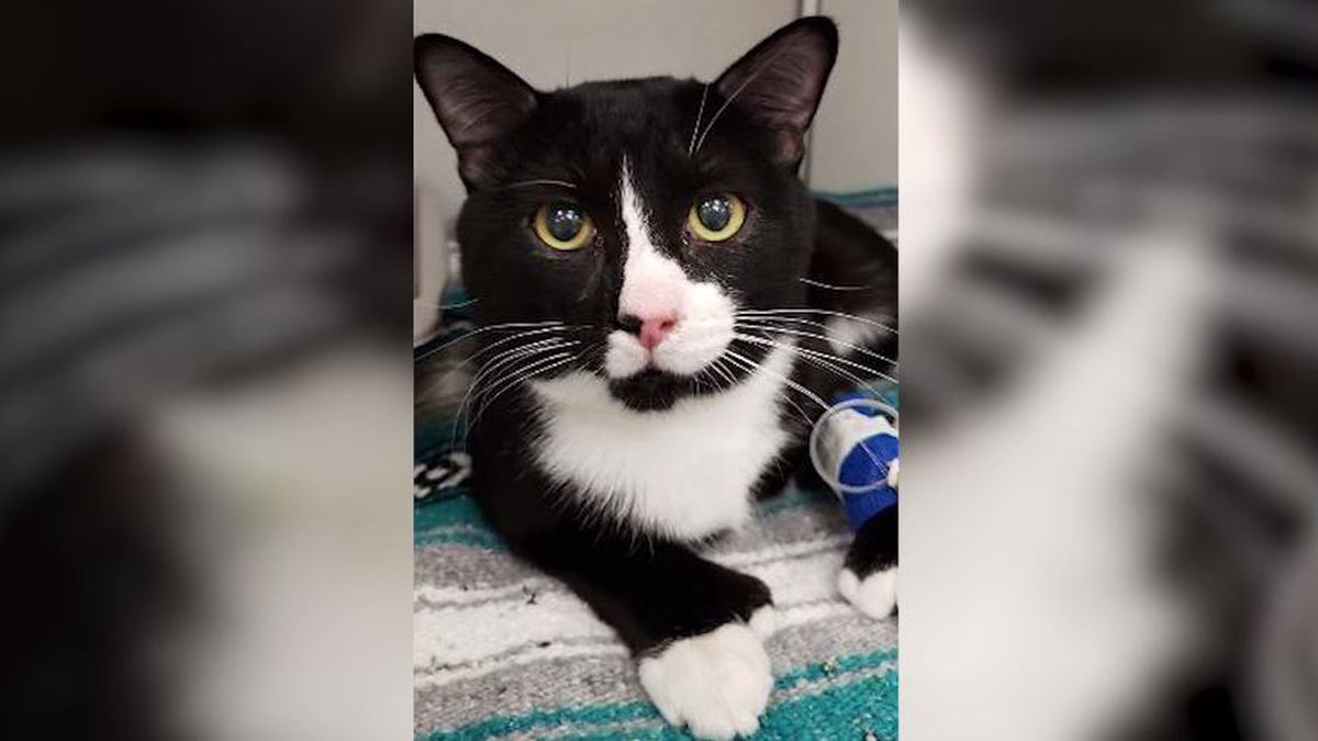 Cat survives full laundry cycle while trapped in owner's washing machine