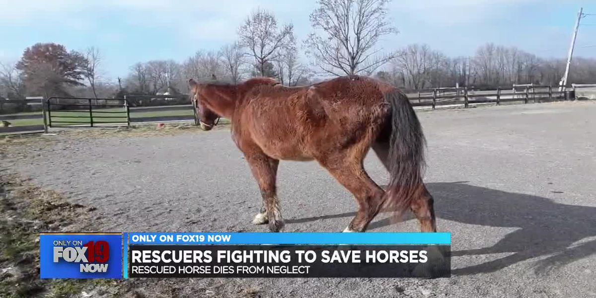 Rescuers fighting to save horses