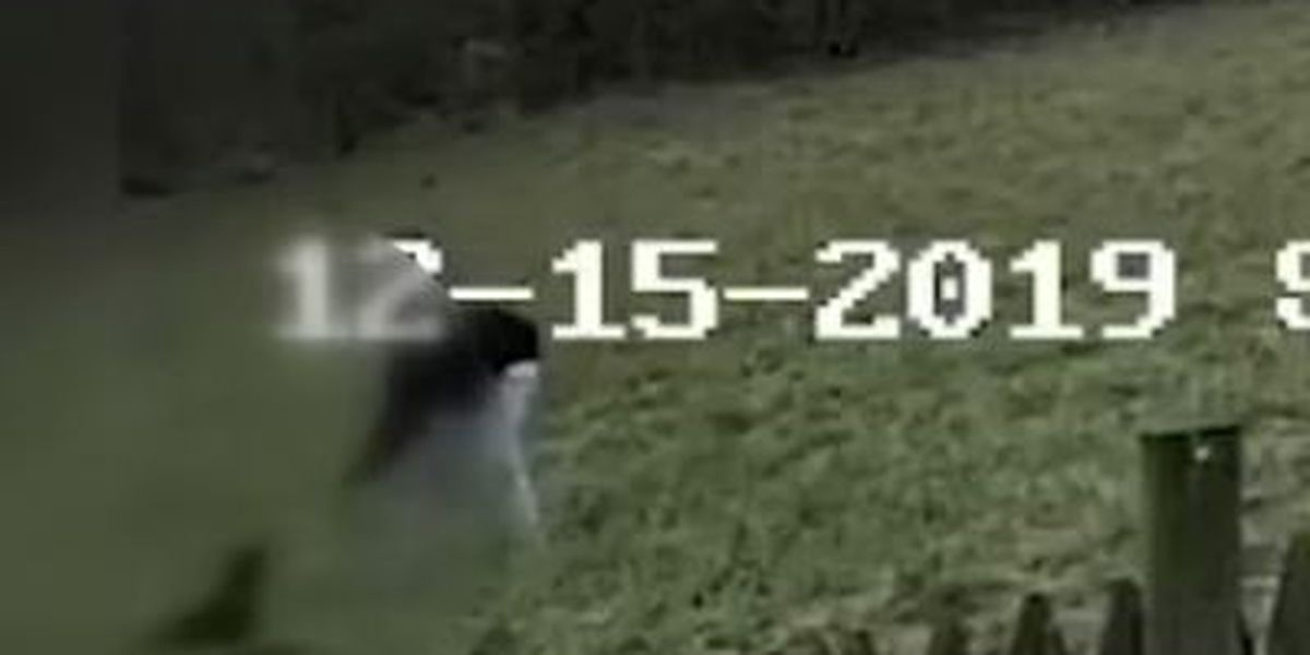 Video shows teen 'helicopter twirling' dog above his head and slamming it into the ground