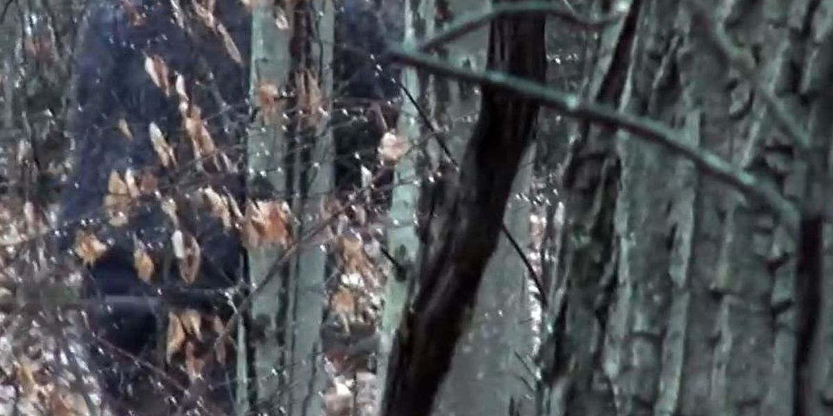 2 men claim to see Bigfoot in southern Ohio park