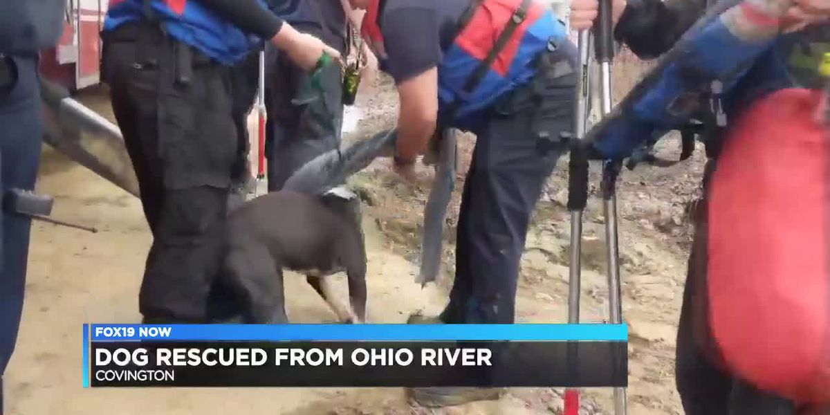 Dogs rescued from Ohio River - clipped version