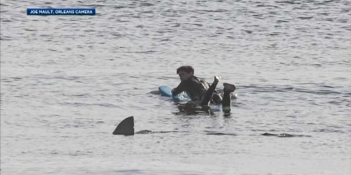 Caught on camera: Cape Cod surfer has close encounter with shark