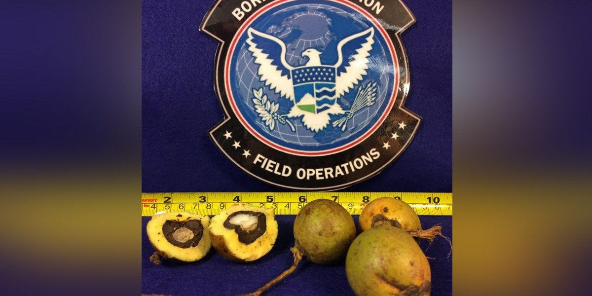 Cincinnati agents seize almost 5K pounds of illegal Mexican fruit