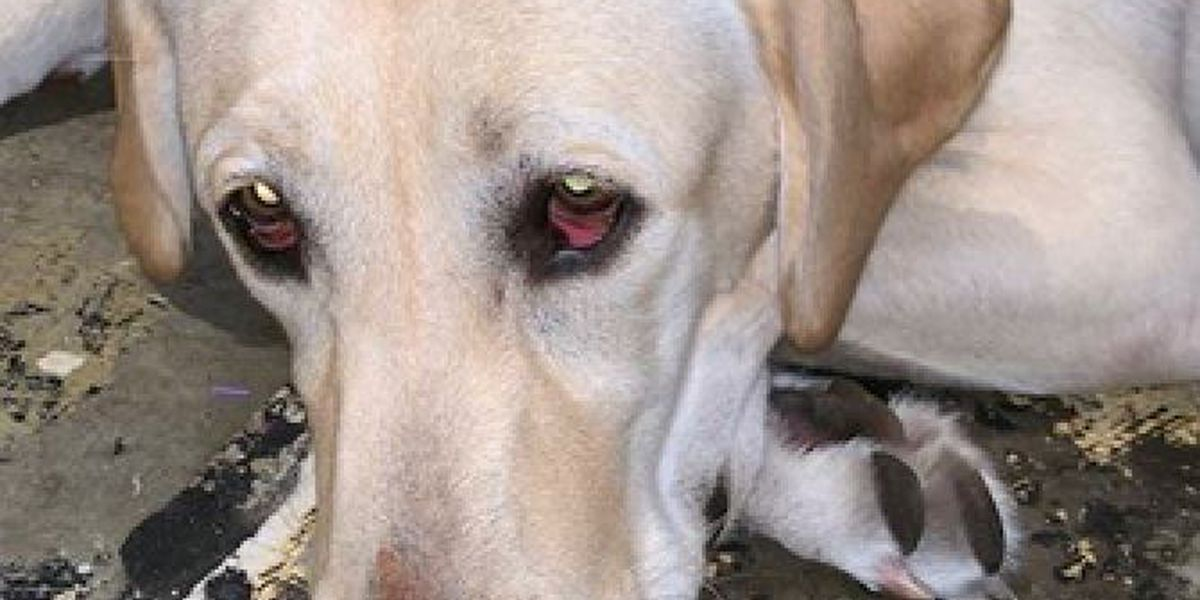 Service dog attacked with irritant at Kenwood Towne Centre