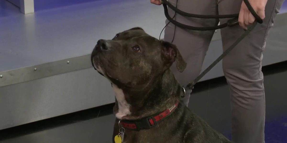 "FOX19 10 a.m. extra recording - VOD - ""Hugo"" is Available to Adopt from Animal Friends Humane Society"