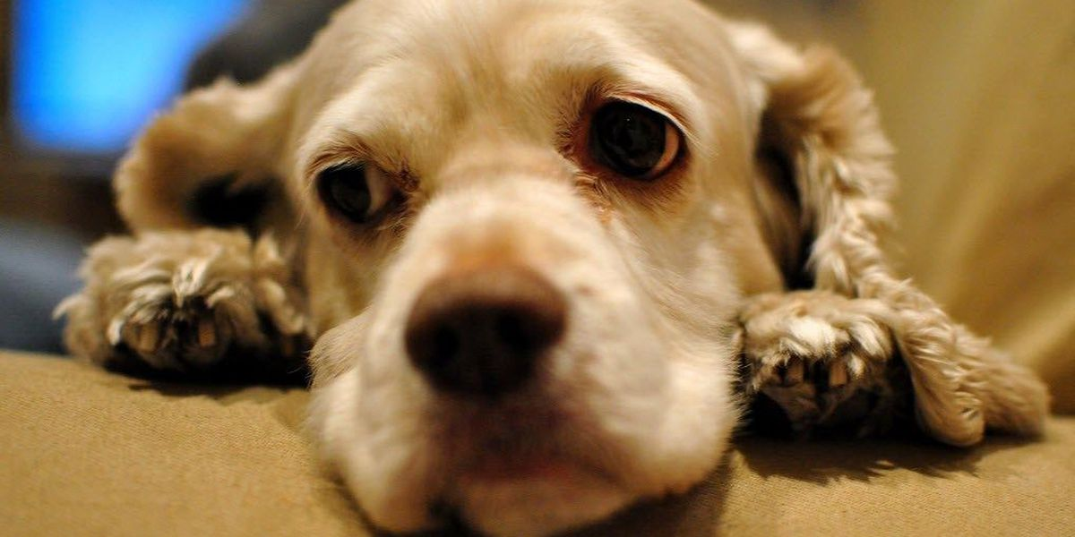 Attorney general warns of online puppy sale scams