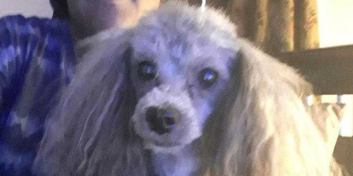 Support dog, reported stolen, returned to woman in North College Hill