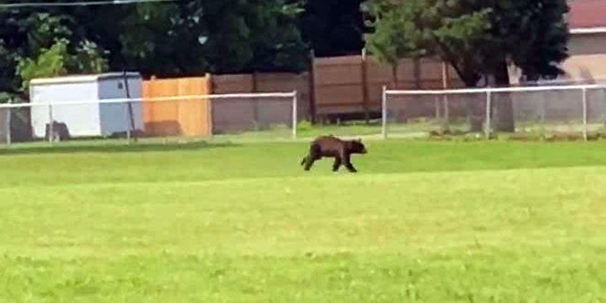Black bear spotted roaming around Pike County
