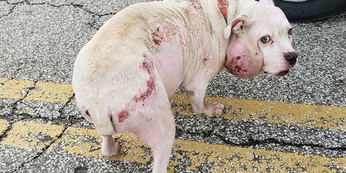 Charges pending against owner of dog found abused in Willoughby
