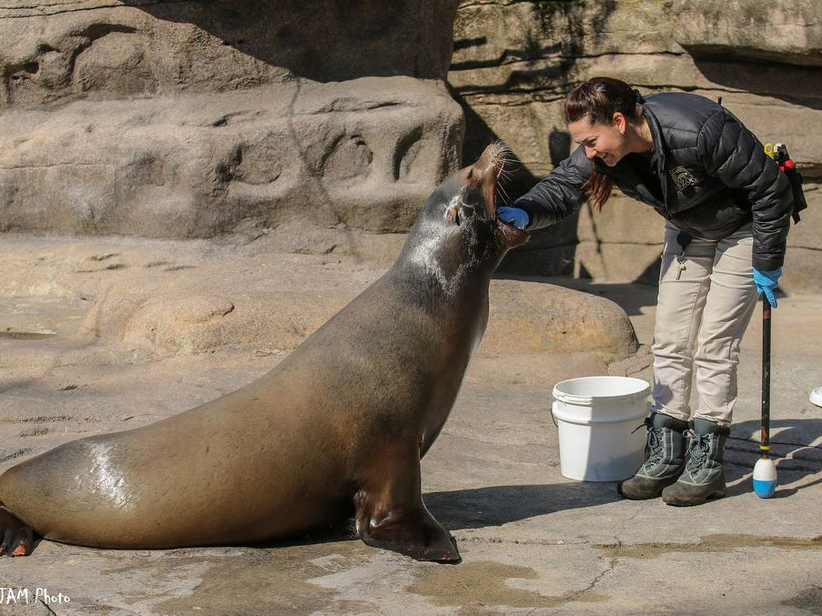 Cincinnati Zoo mourns loss of beloved California sea lion