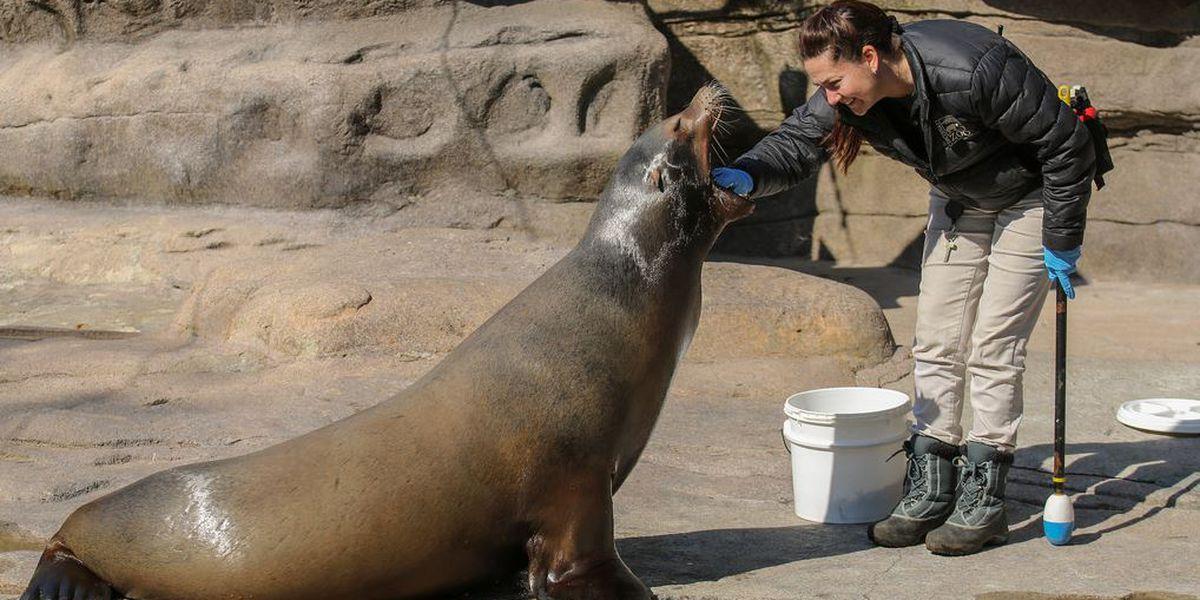Cincinnati Zoo mourns death of beloved California sea lion
