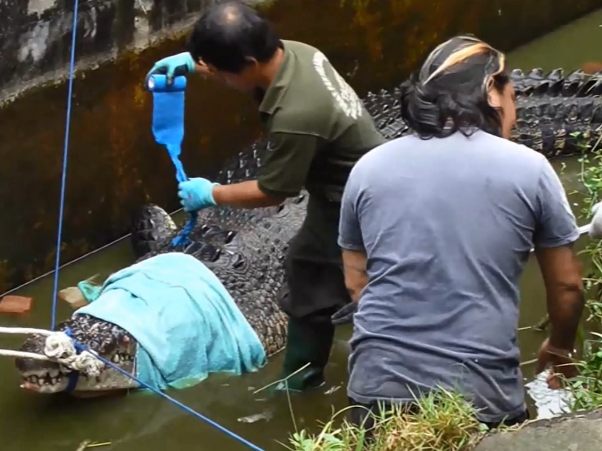 GRAPHIC: Scientist mauled to death by 1,500-lb crocodile at Indonesian laboratory