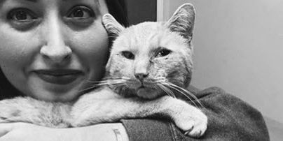 Cat in care of local organization after allegedly being beaten by teens with baseball bat