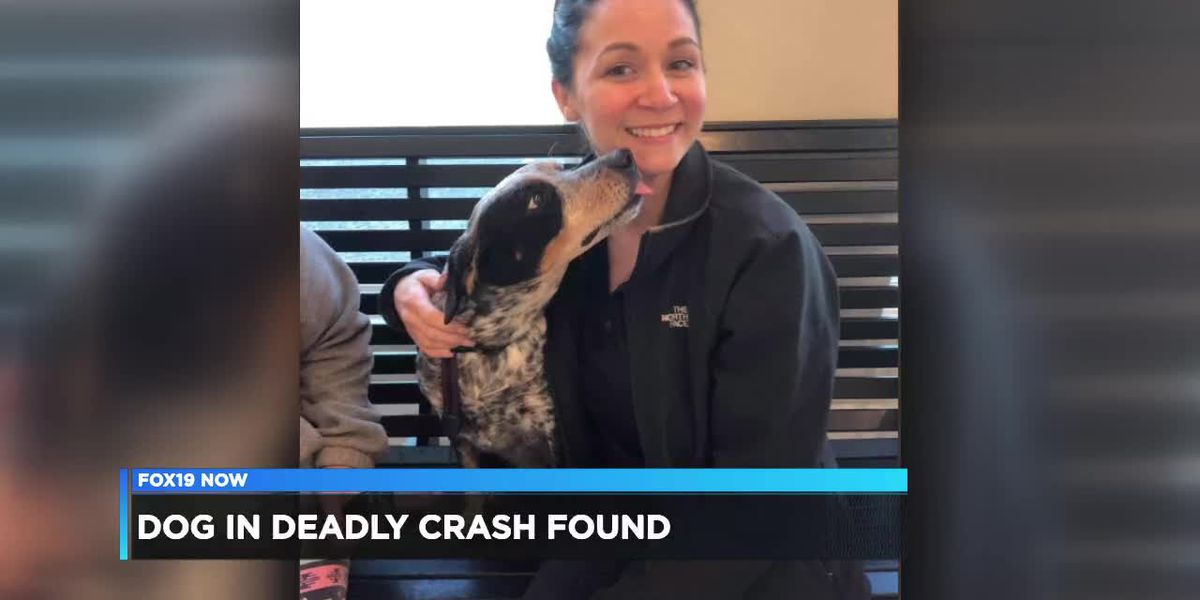 'Ellie the Blue Heeler' found 2 weeks after crash that killed family members