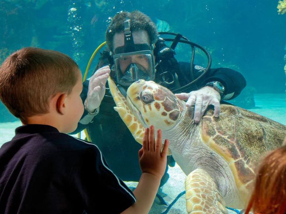 Help Newport Aquarium become the #1 aquarium in the country