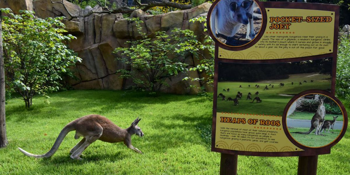 Cincinnati Zoo's Roo Valley opens to the public