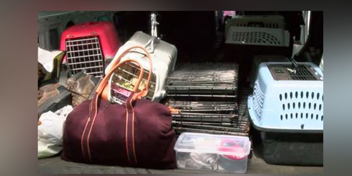 Dozens of dogs rescued by Humane Association of Warren Co. from hoarding situation in TX