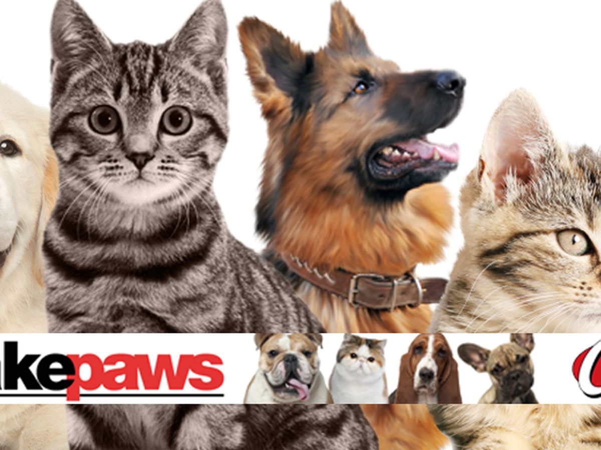 TAKE PAWS: Adoptable Pets Across the Tri-State