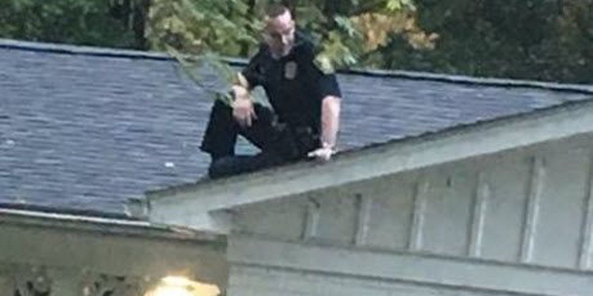 PHOTO: Officer uses 'catlike reflexes' to avoid charging dogs