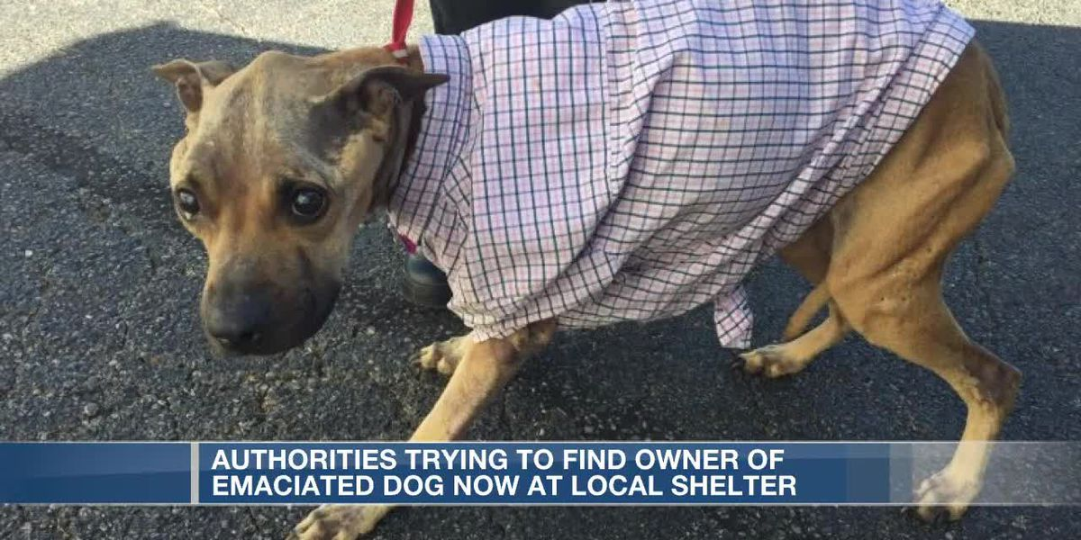 Scared, hungry dog found in Hamilton, officials now looking for her owners
