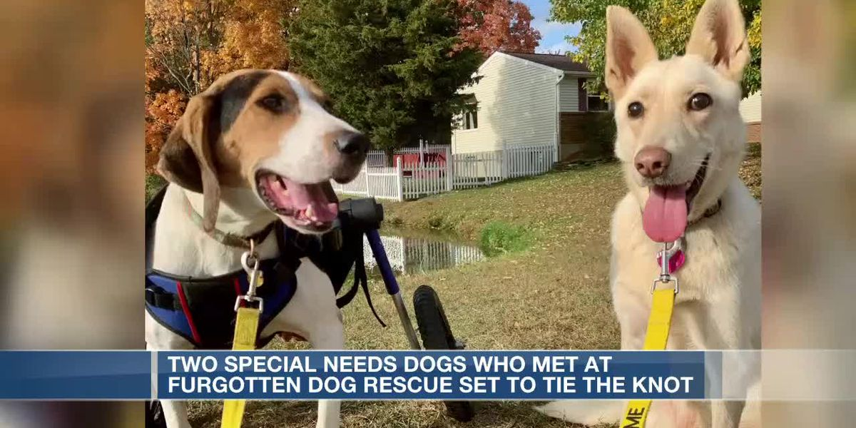 2 special needs dogs tie the knot in Tri-State