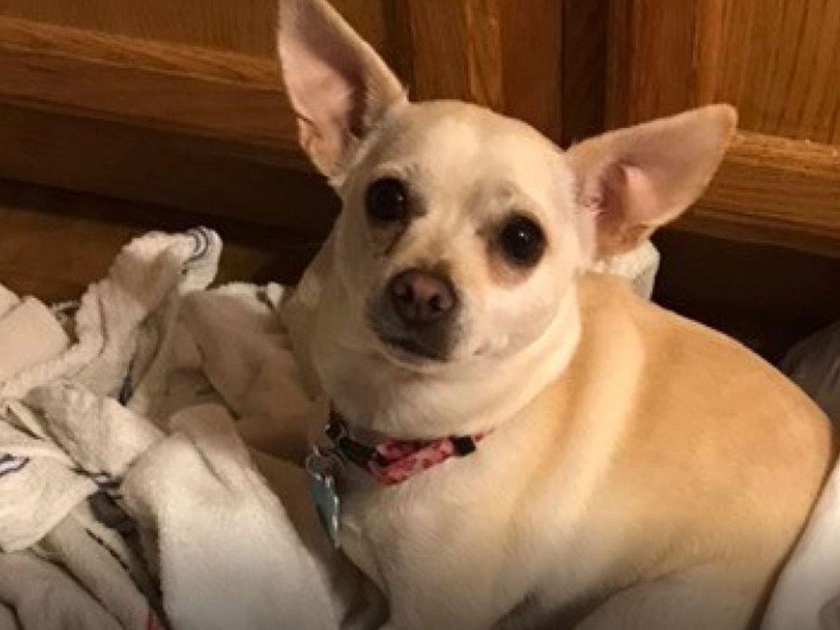 Couple searches for dog that went missing after traffic crash