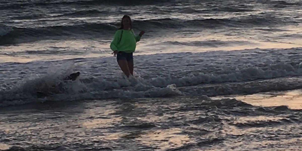 Sea lion attacks 13-year-old girl on California beach; Neurotoxin may be to blame