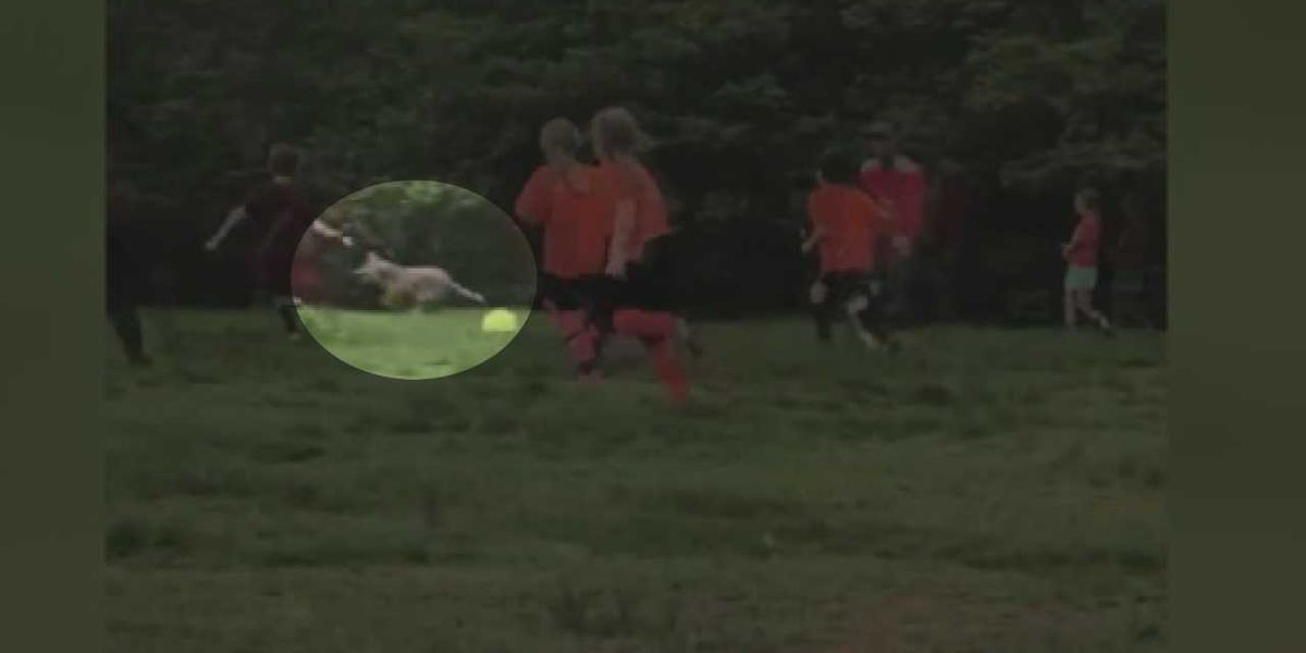 Video shows coyote dash through area youth soccer game