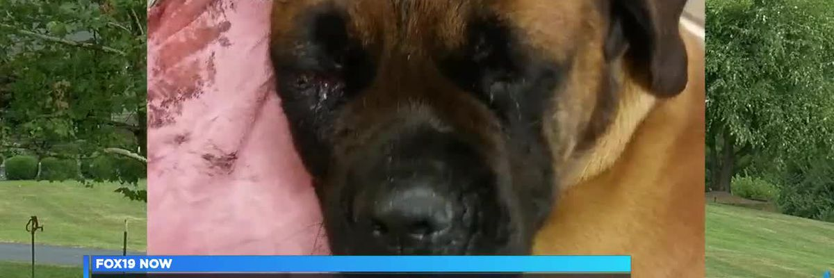 Deputy: Doctor hits dog in head with hammer