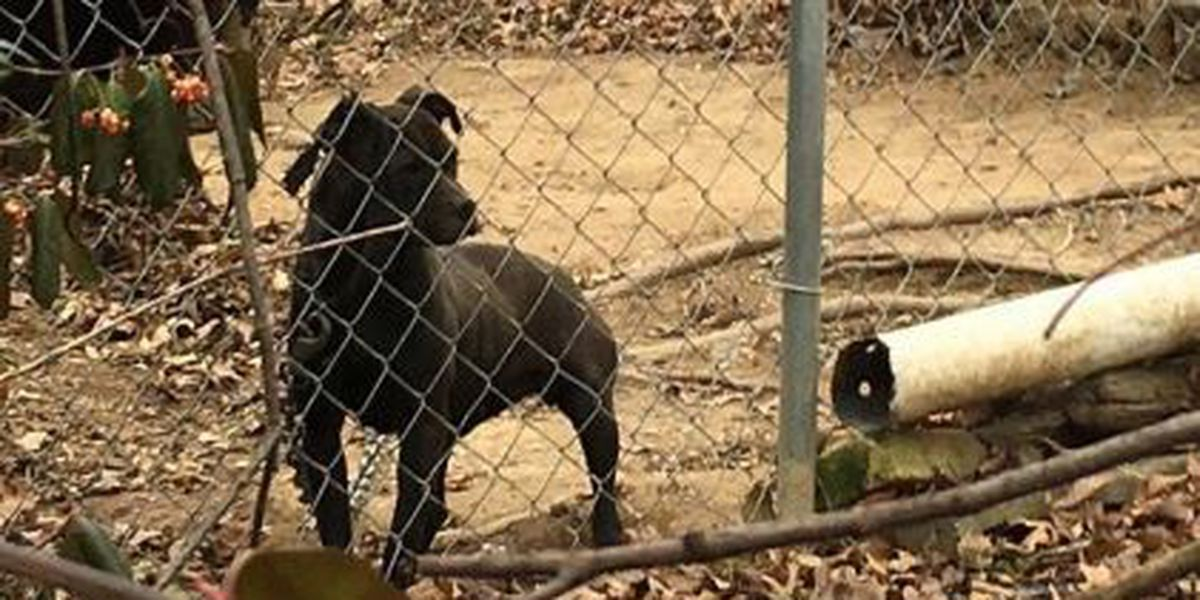 Petition demands laws preventing dog tethering in extreme weather