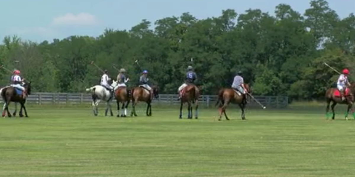 Former racehorses get new lease on life at Cincinnati Polo Club