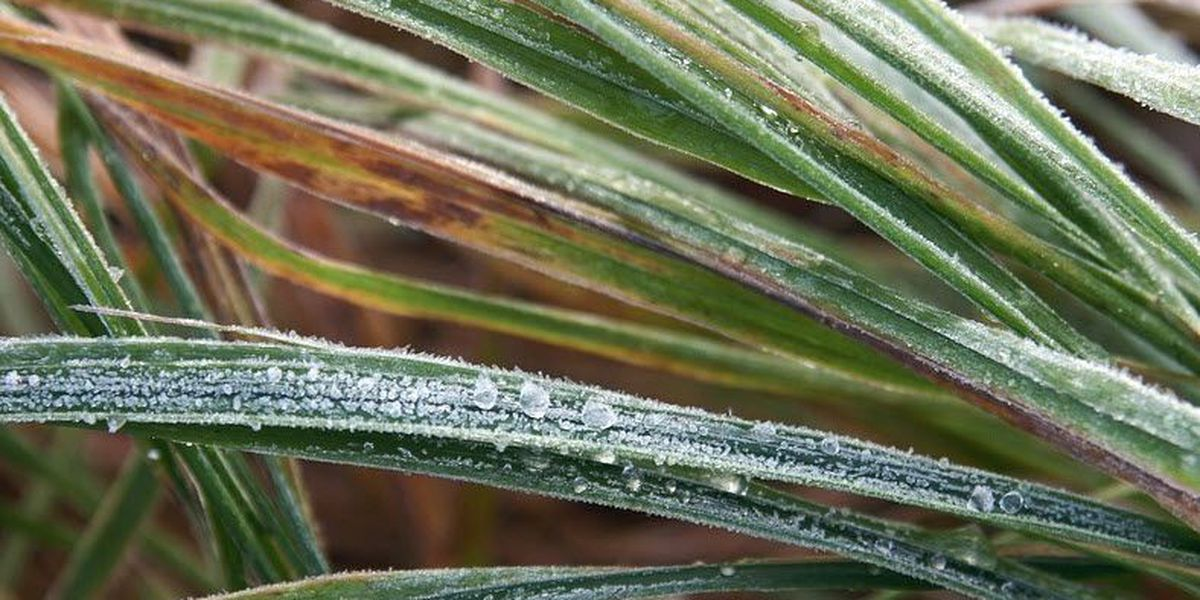 First freeze on the way for Cincinnati