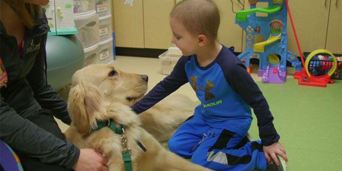 Cincinnati Children's employ golden retrievers