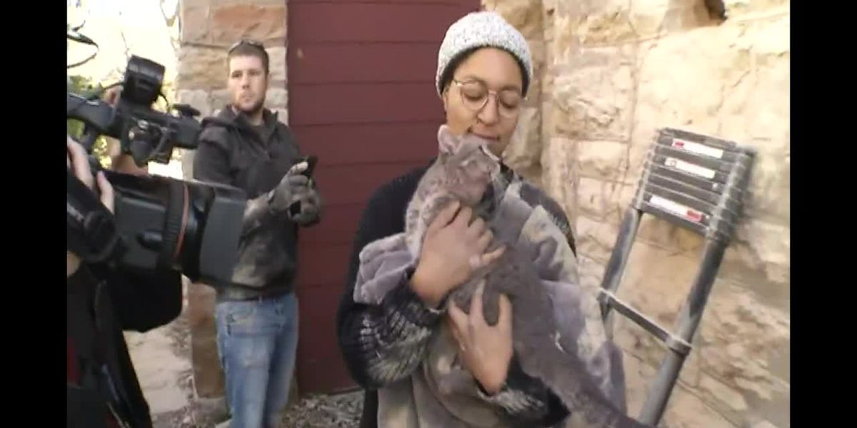 Cat rescued from chimney after being trapped for four days